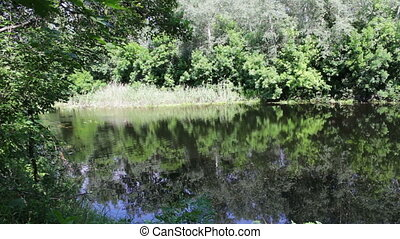 Reflections of trees, foliage and water lilies are swaying on the watery surface of the river