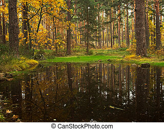 reflections of trees in the pond