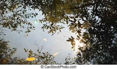Reflections of trees in the river with sunshine