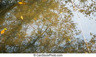 Reflections of trees in the water