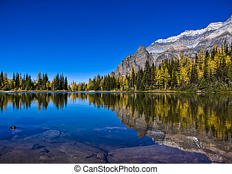 Reflections on Mountain Lake in Autumn