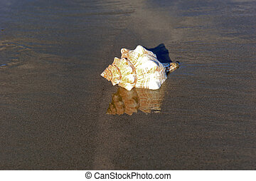 reflections on the beach