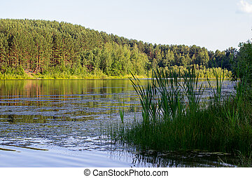 Reflections on the Coniferous Forest on a Wilderness Lake.