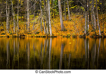 Reflective Autumn Pond Landscape