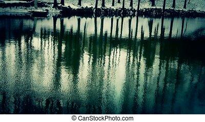 reflet, forêt, eau