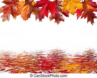 reflet, secteur, feuilles, chute eau, message, autour de
