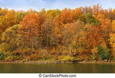 reflet, ?utumn, forêt, th, rivière, sien, banque