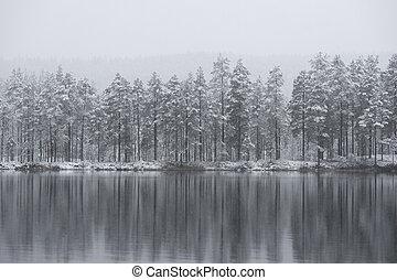 refletido, gelo, árvores, magra, ou, água, coniferous, inverno