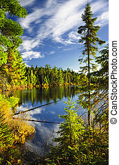 refletir, céu, floresta lago