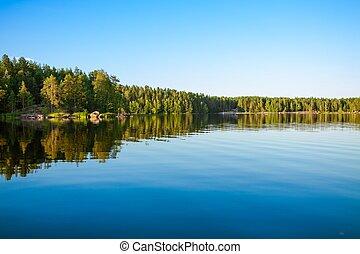 refletir, floresta lago