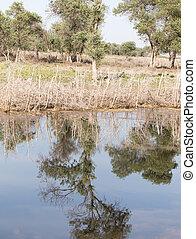 reflexão água, árvores