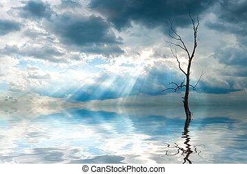 reflexão árvore, em, água