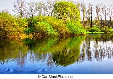 reflexão, de, árvores, em, a, rio