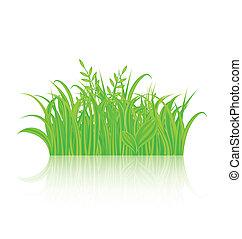 reflexão, isolado, experiência verde, branca, capim