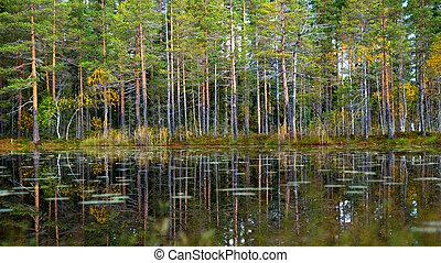 reflexão, tarn, árvores, pinho