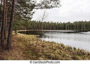 reflexões, de, árvores, em, a, rio, água