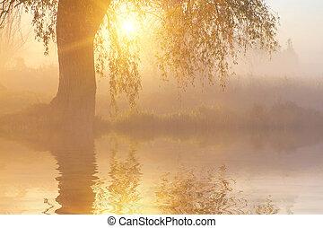 reflexión, de, árboles, en, el, orilla, en, salida del sol, rayos