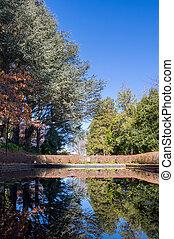 reflexión, de, un, jardín, de, el, charca, en, un, soleado, día claro