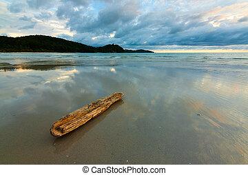reflexion, av, skyn, på, våt sand