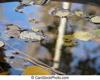 reflexiones, de, otoños
