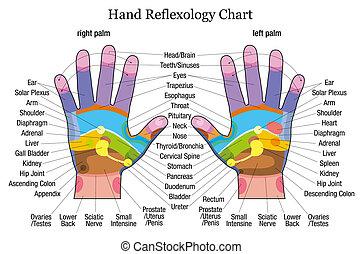 reflexology, mão, descrição, mapa