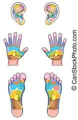Reflexology Zones Ears Hands Feet - Reflexology zones -...