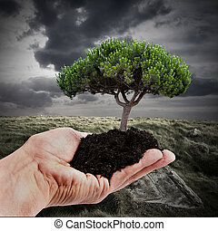 reforestation and sustainable forest
