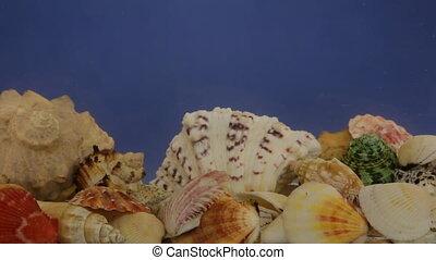 Refraction of waves of sunlight reflected on seashells....