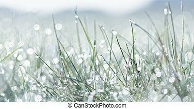 Refreshing morning dew - Green and fresh background. Cold...