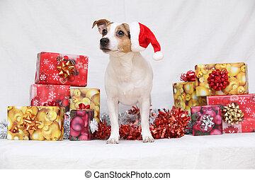 regalos, navidad, terrier, russell, gato