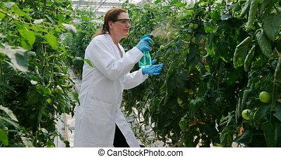 regar, científico, planta, invernadero, 4k