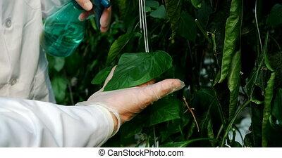 regar, científico, plantas, invernadero, 4k