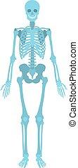 regard, comment, aimer, squelette humain
