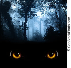 regard, obscurité