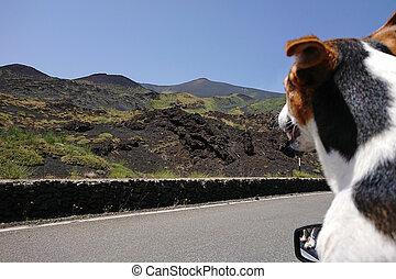 regard, voiture, chien, fenêtre, apprécier, ouvert, voyage, route, dehors