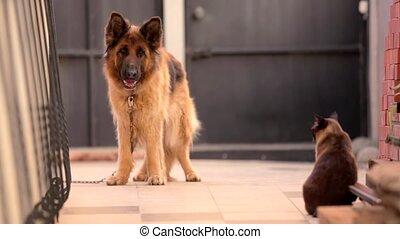 regarde, chien, chat