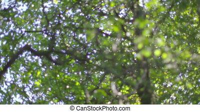 regarder, appareil photo, haut, arbres
