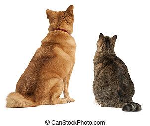 regarder, chat, chien, haut