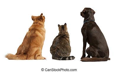 regarder, chat, chiens, haut