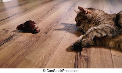 regarder, chat, snail., animals.
