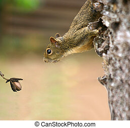 regarder, déjeuner, sien, écureuil