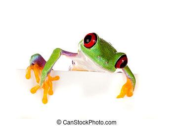 regarder dérobée, observé, grenouille, rouges