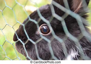 regarder, engrené, par, lapin, barrière