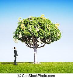 regarder, homme affaires, arbre, argent