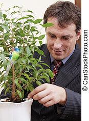regarder, homme affaires, plante, après, intérieur