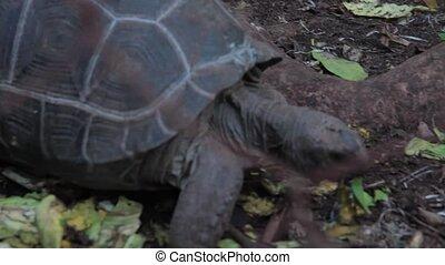regarder, mignon, tortue, appareil photo