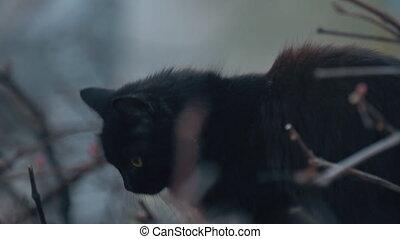 regarder, noir, quelque chose, chat