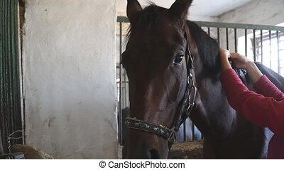 regarder, sien, soucier, lent, cheval, animal., unrecognizable, mâle, brun, préparer, concurrence, fin, appareil-photo., haut, jockey, mouvement, ou, beau, ride., chouchou, mains, museau