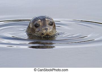 regarder, tête, port, eau source, rivage, après-midi, cachet, dehors