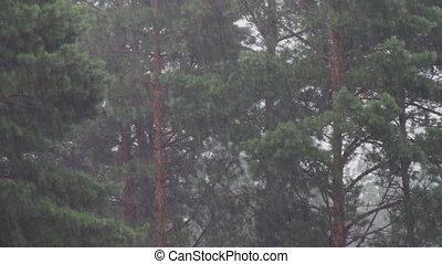 regen, auf, a, hintergrund, von, bäume.